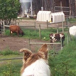Holly Gowdy, Brookfield Farm, Walpole, NH