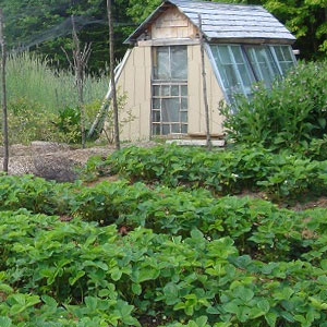 Wintergreens Farm and Aquaponics, North Stratford, NH