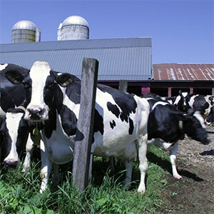 Bartlett Farm Dairy, Concord, NH