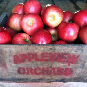 Appleview Orchard, Pittsfield, NH